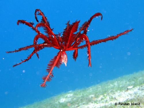 underwater_of_pandan_philippines.jpg