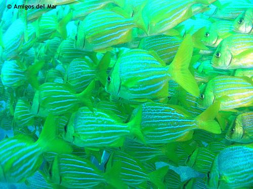 school_fish_san_lucas_diving.jpg