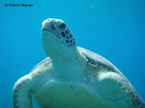 turtle_abu_dabbab.jpg