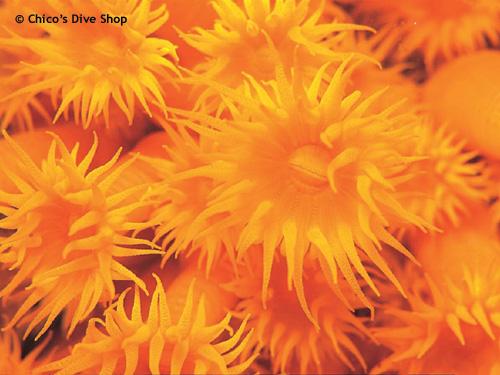 orange_tube_los_arcos.jpg