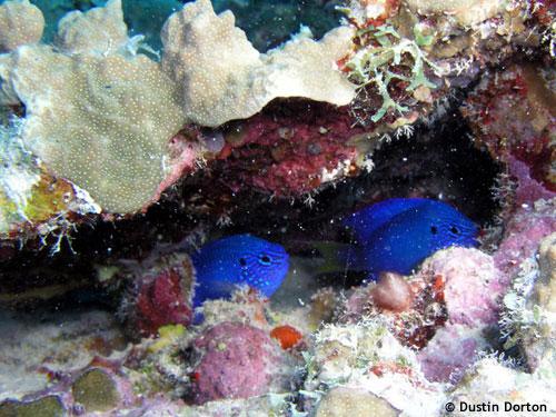 damsels_inner_lagoon.jpg