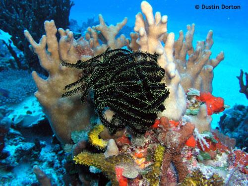 diving_crinoid_wau_island.jpg
