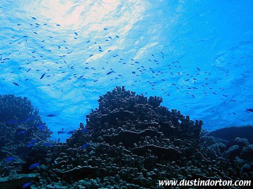 diving_delap_reef_overview.jpg