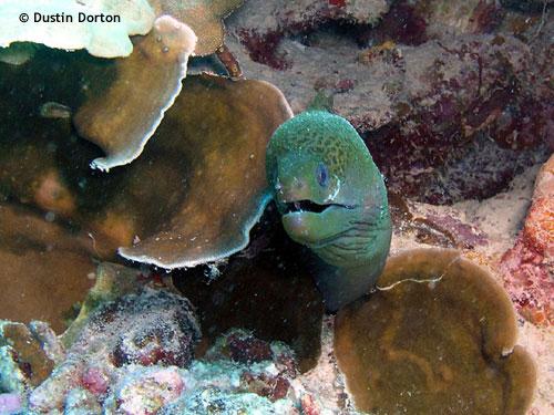 eel_lagoon_dive_site.jpg