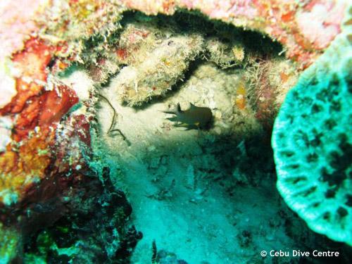 coral_reef_moalboal.jpg