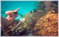 <p>Guests of Cayo Espanto snorkel by Brain Coral, at Coral Gardens, off Ambergris Caye, Belize</p>