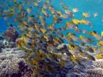 <p>Daedalus Reef</p>