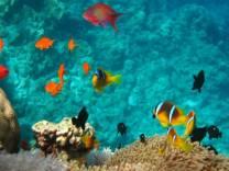 <p>Like an aquarium, Daedalus reef</p>
