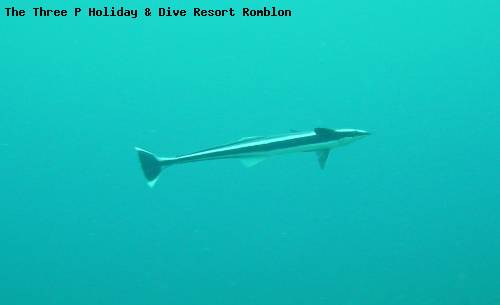 the_three_p_holiday_dive_resort_romblon_103.jpg