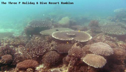 the_three_p_holiday_dive_resort_romblon_108.jpg