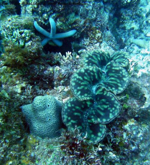 the_three_p_holiday_dive_resort_romblon_118.jpg
