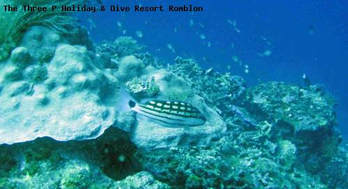 the_three_p_holiday_dive_resort_romblon_25.jpg