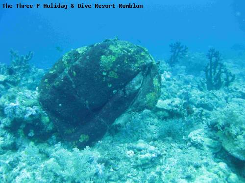 the_three_p_holiday_dive_resort_romblon_34.jpg
