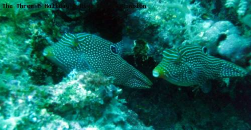 the_three_p_holiday_dive_resort_romblon_47.jpg