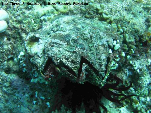 the_three_p_holiday_dive_resort_romblon_57.jpg