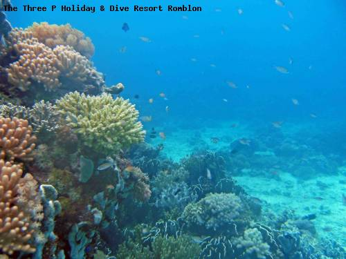 the_three_p_holiday_dive_resort_romblon_59.jpg