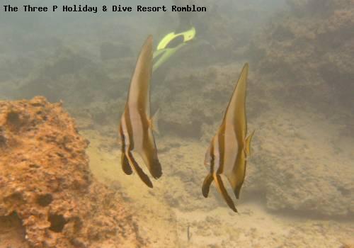 the_three_p_holiday_dive_resort_romblon_60.jpg