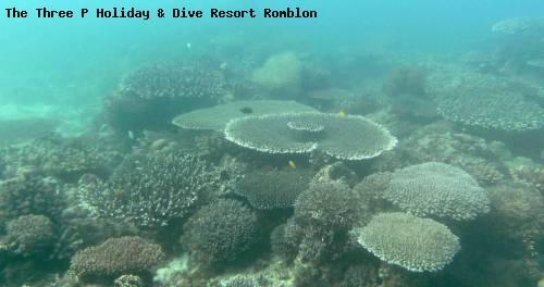 the_three_p_holiday_dive_resort_romblon_61.jpg