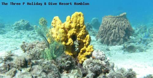 the_three_p_holiday_dive_resort_romblon_67.jpg
