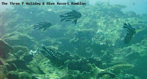 the_three_p_holiday_dive_resort_romblon_72.jpg