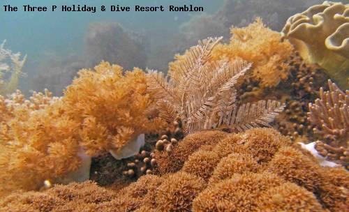 the_three_p_holiday_dive_resort_romblon_77.jpg