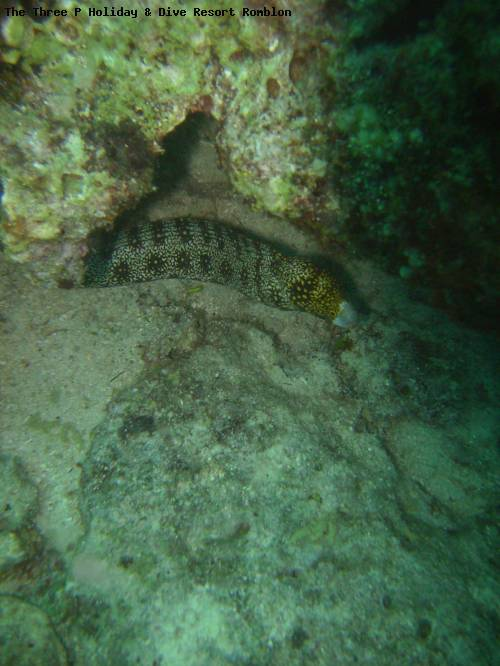 the_three_p_holiday_dive_resort_romblon_79.jpg