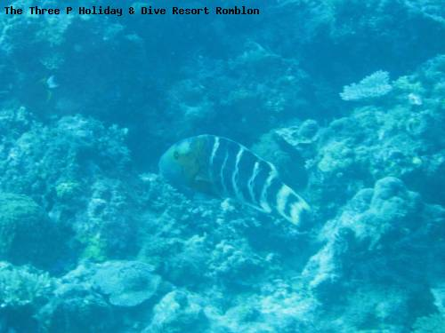 the_three_p_holiday_dive_resort_romblon_80.jpg