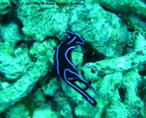 the_three_p_holiday_dive_resort_romblon_82.jpg