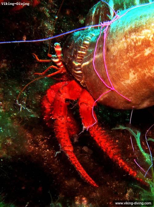hermit_crab.jpg