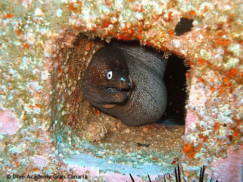 moray_at_artificial_reef.jpg