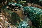 <p>This turtle was eating and stayed close for a long time.</p>