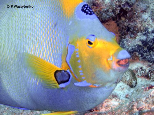 9_foot_stake_big_fish.jpg