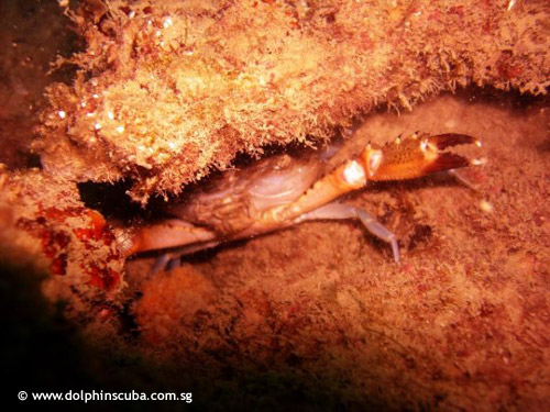 crab_hiding.jpg