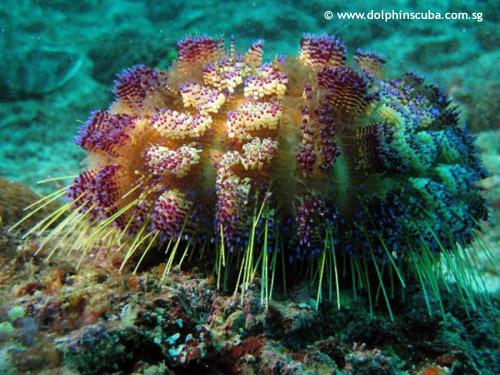 sea_urchin_walking.jpg