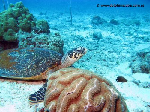 turtle_captains_point.jpg