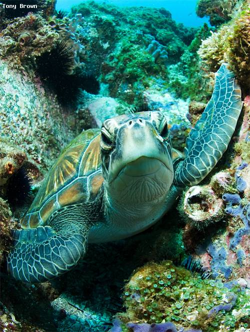 green_turtle_south_west_rock.jpg
