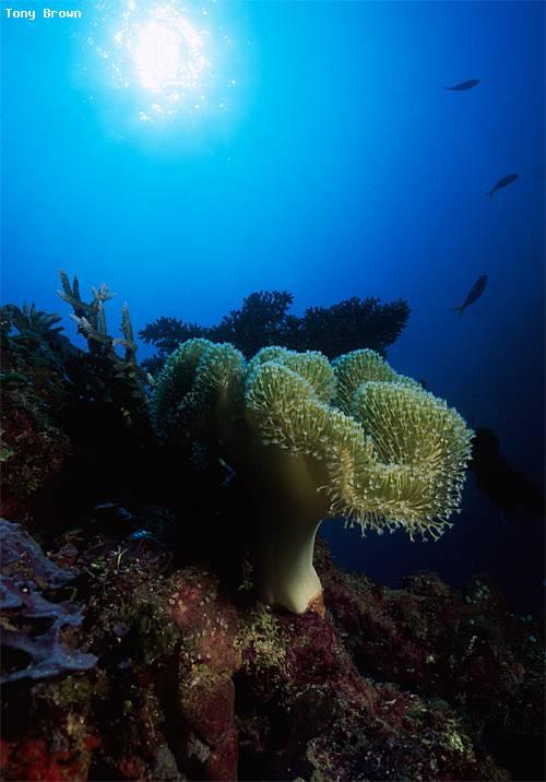 toa_maru_soft_corals.jpg