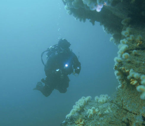 inis_boffin_diving_ireland.jpg