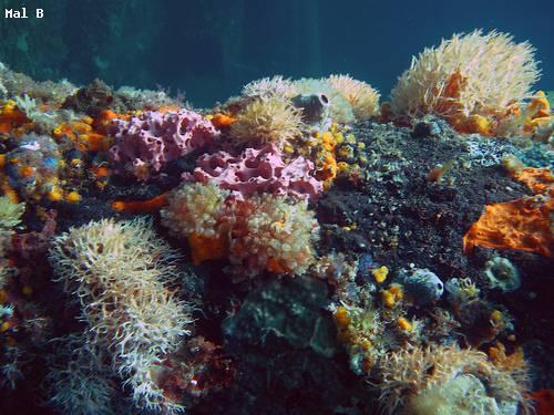 corals_busselton_western_australia.jpg