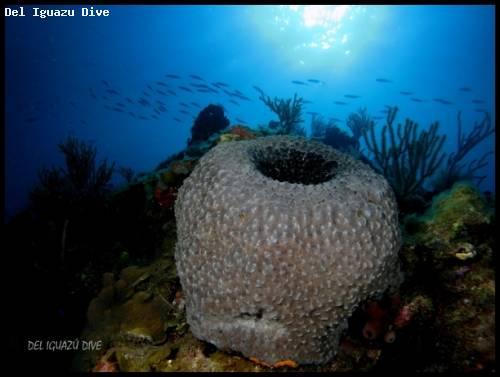 tube_coral.jpg