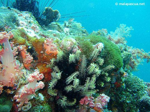 small_beach_soft_corals.jpg