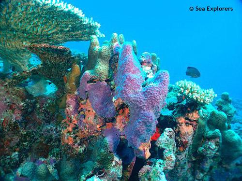 garden_of_sponges.jpg